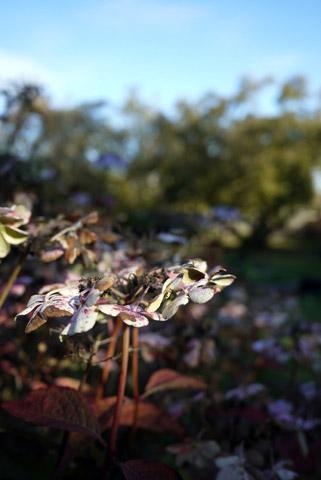 秋の畑模様