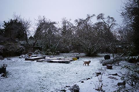 ビクトリア 初雪