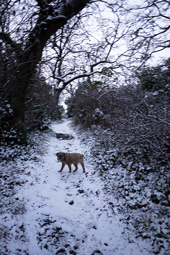 2013first_snow3