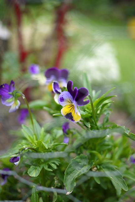 2016spring_flowers1