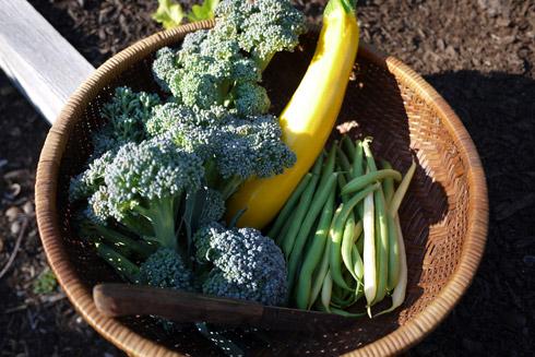 お野菜 in Aug