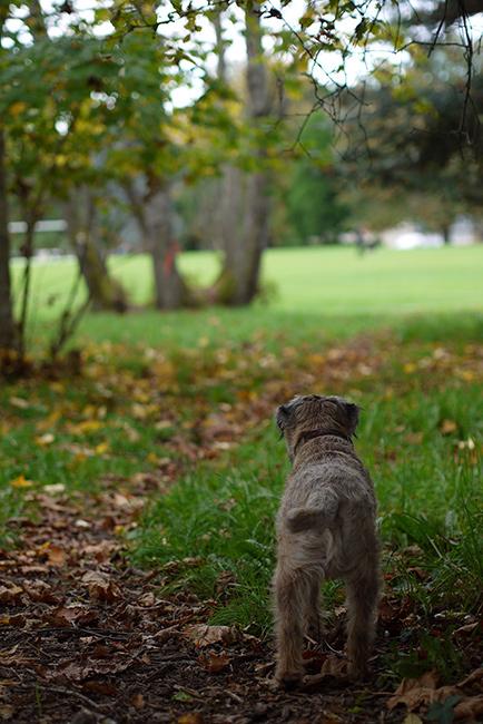 秋の散歩より