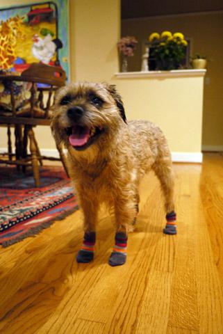 犬用の靴下