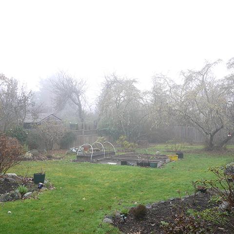 霧のビクトリア