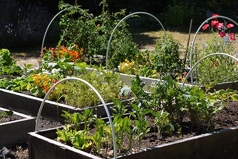 July31_garden2