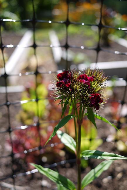 May29_Garden5
