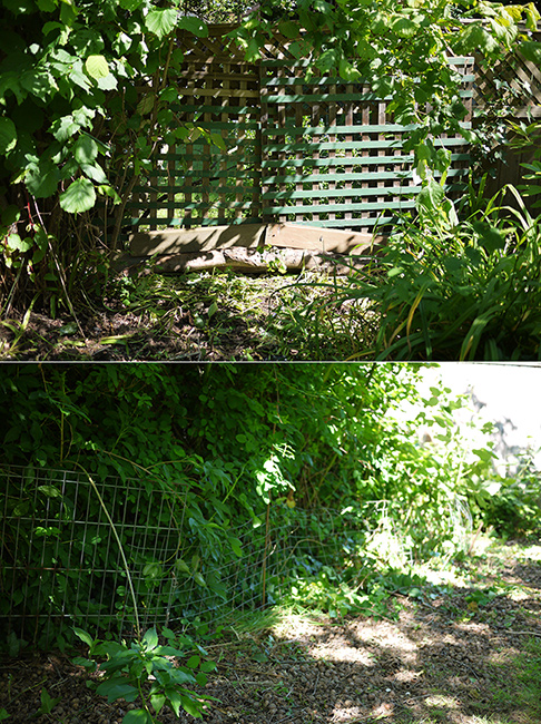 May29_Garden6