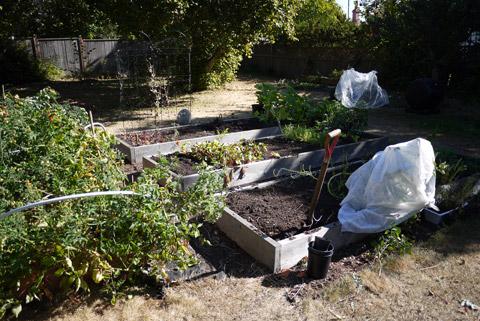 2012 10月の畑
