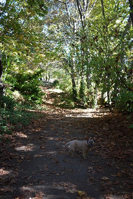 Gus散歩