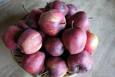 庭のりんご スターキング