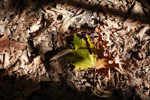 autumnleaf_gus