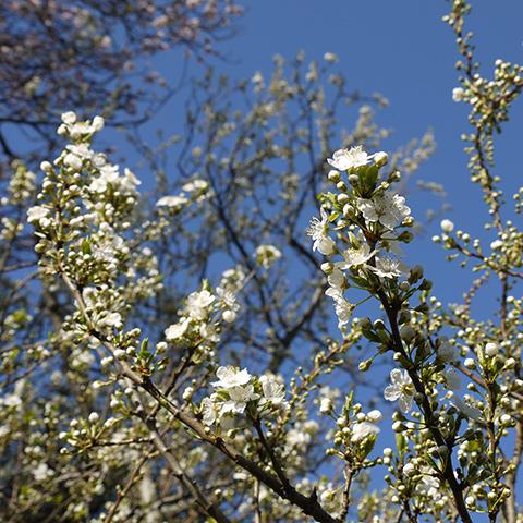 blossom_day2