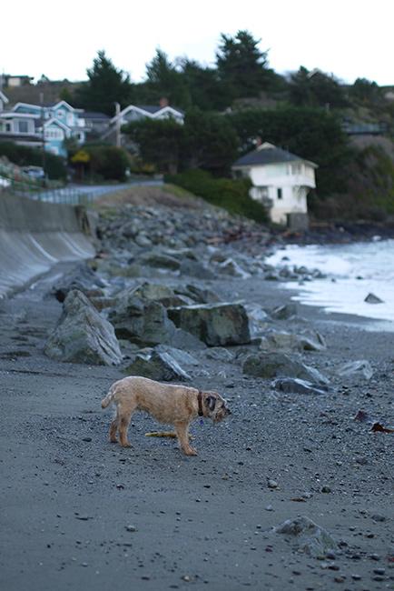 灯台のある向こう側の小さな島と私たちのいる海岸の間は、穏やかな日でも潮の流れが速い。カヤックで横断(縦断?)するのはとても難しい。