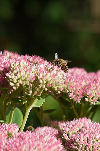 fall_bee