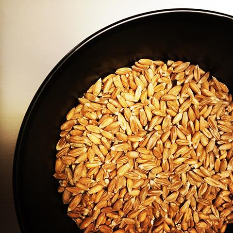 spelt kernels