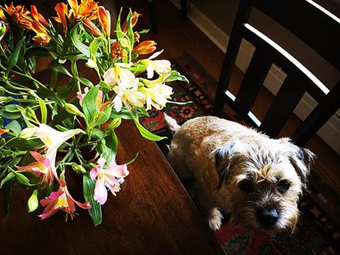 flowergift-gus