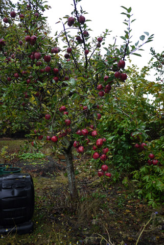 garden apple