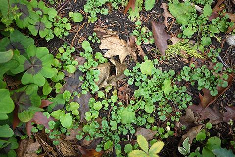 ビクトリア 秋の庭