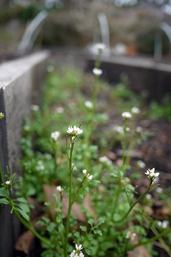 gardenbaby2
