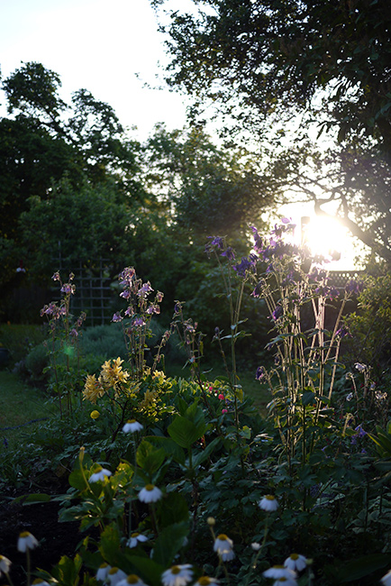 morning_garden1