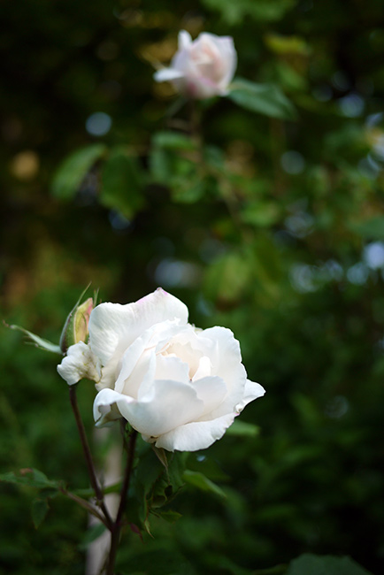 morning_garden4
