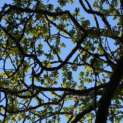 ビクトリア春の陽