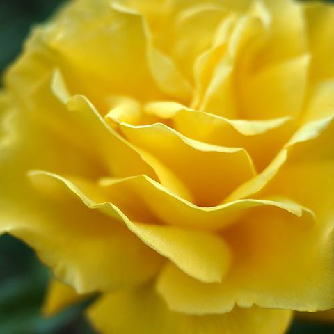 radiantperfume3