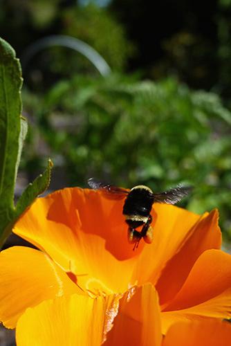 veggie_bees8