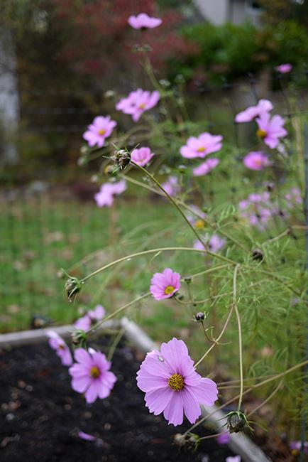 weekend_gardenwork4