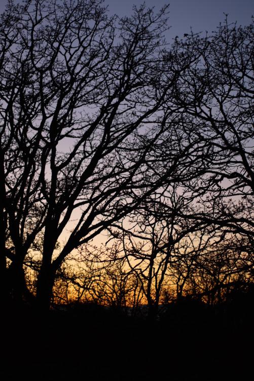冬の夕焼け