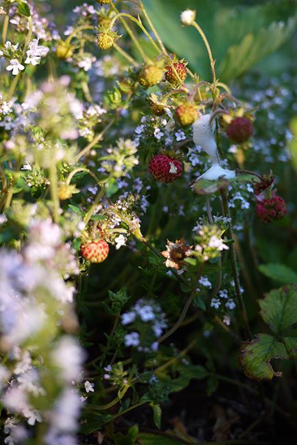 1morning_garden1