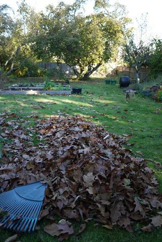 2012年 秋の庭