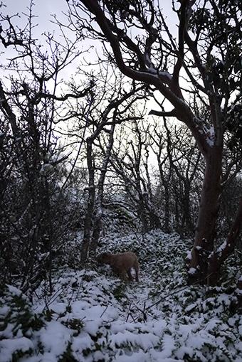 2013first_snow5