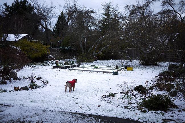 2014 fist snow
