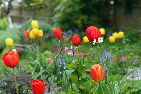 ビクトリア春の庭