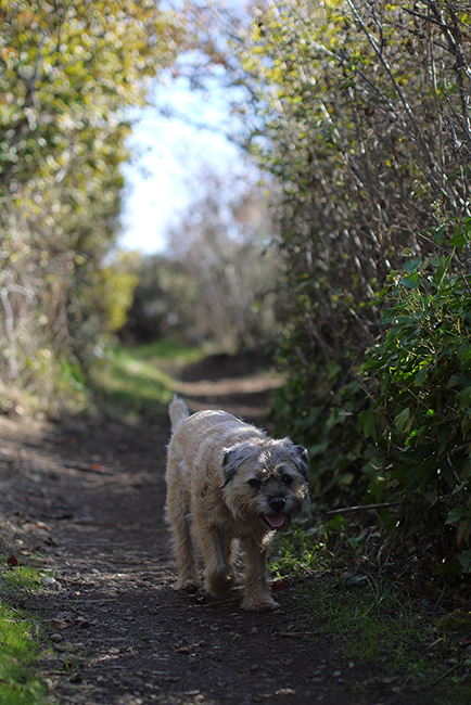 gus_walking_path