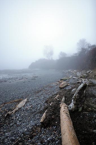 霧のマクニールベイ
