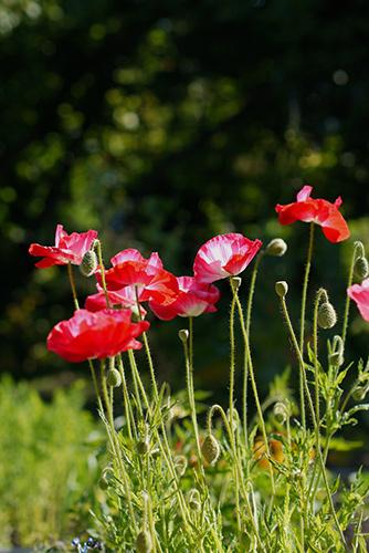 Jul19sat_garden1