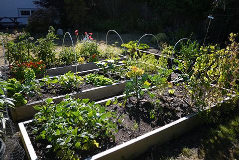 July31_garden1