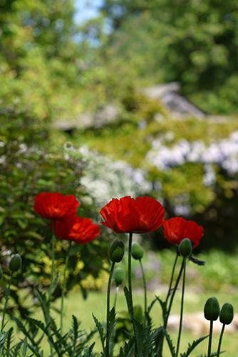 May_garden_flower1