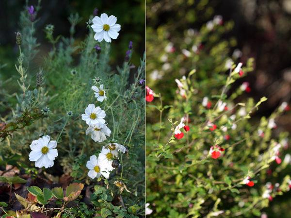 nov6_garden1
