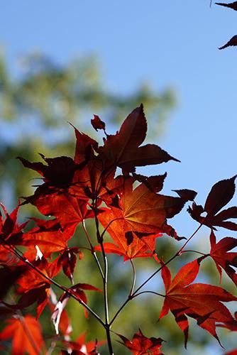autumncolor1