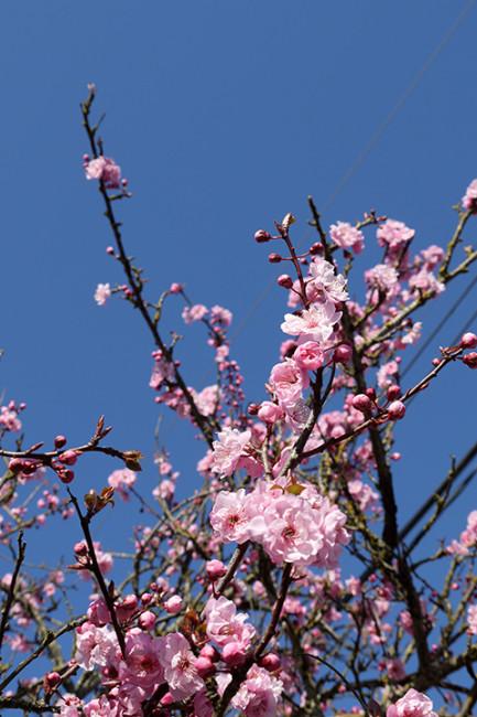 blossom_day1