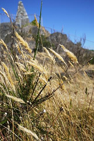 枯れ草の色
