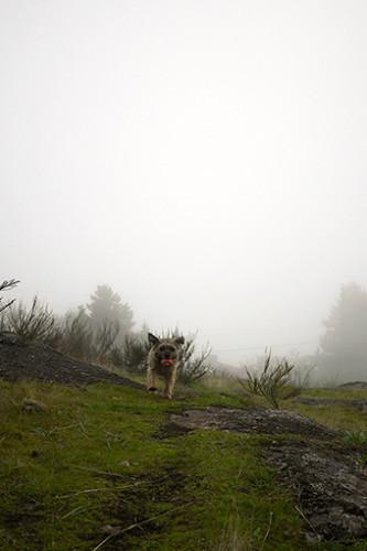 霧の中の散歩