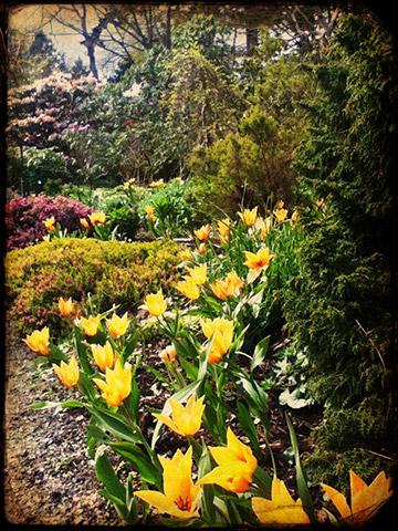 uvic finnerty garden