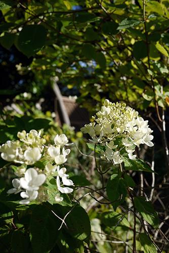 friday_flower