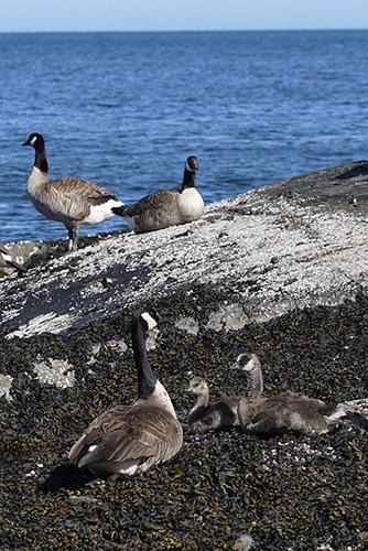 goose-season2
