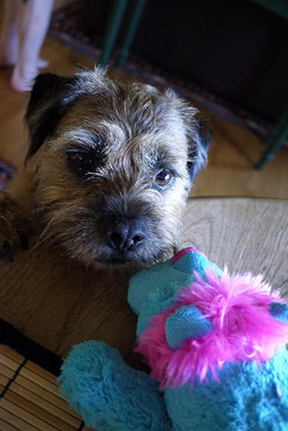 Gusの6歳の誕生日
