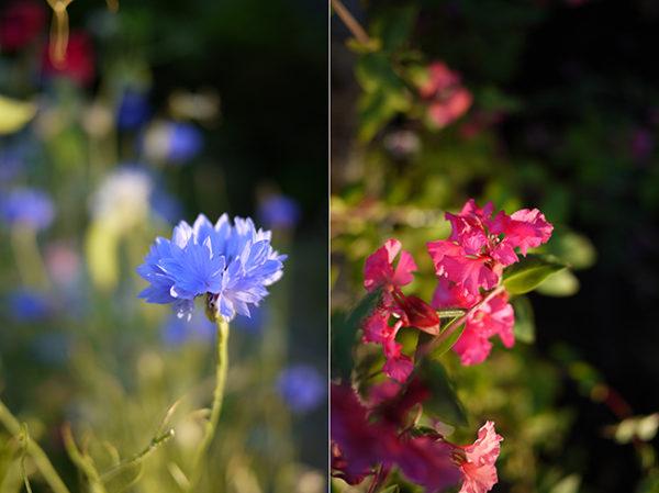 morning_light_august6